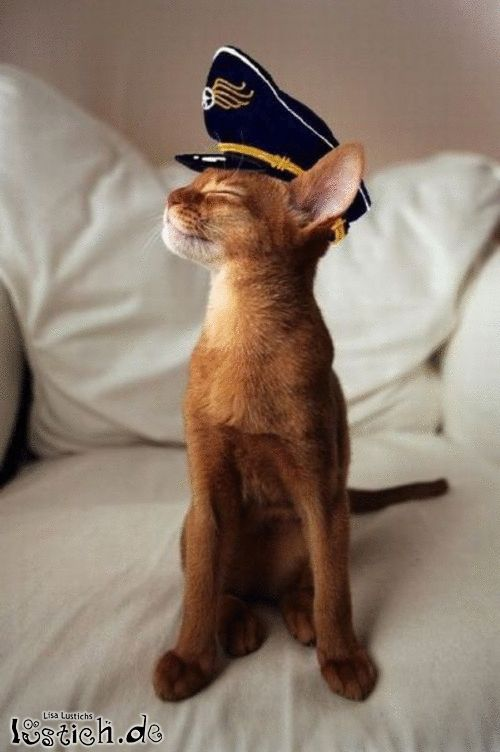 Ich werde jetzt Captain