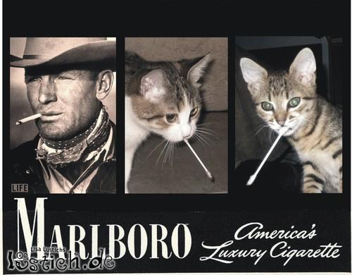 Smoking With Style
