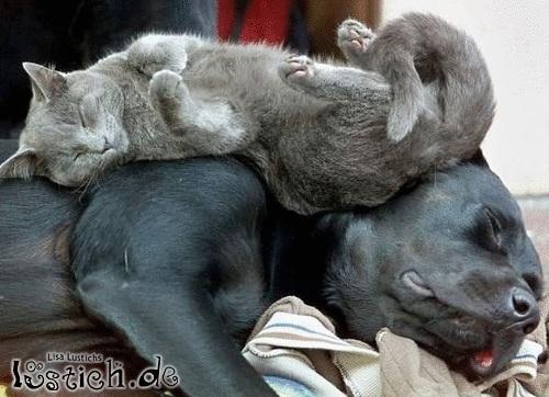 Süßer Schlafplatz