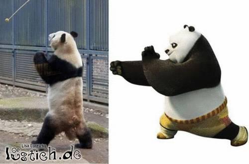 Pandatraining
