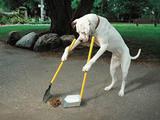 Fegender Hund