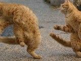 Rapper Katzen