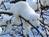 Eisbär auf dem Baum