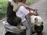 Mit den Hunden Gassi gehen