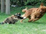 Katze jagt Hund