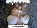 Katze in Unterwäsche