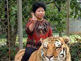 Tiger reiten