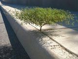 Kleiner Baum am Wegesrand