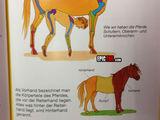 Pferdeanatomie