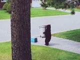So ein höflicher Bär