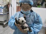 Hurra, ich bin geboren!