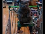 Mit Katze einkaufen