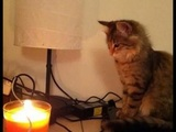 Ein niedliches Kätzchen