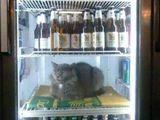 Katzenfrost