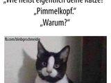 Pimmelkopf