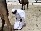 Unter dem Kamel