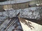 Krähe surft auf Dach
